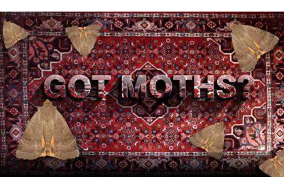 Moth Season